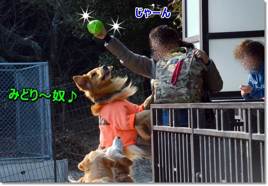 DSC_0605_20160323232448d49.jpg