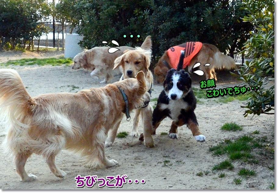 DSC_0781doya!.jpg