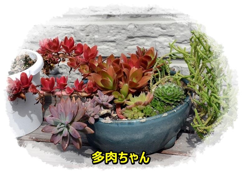 DSC_1152_2016041119413640a.jpg