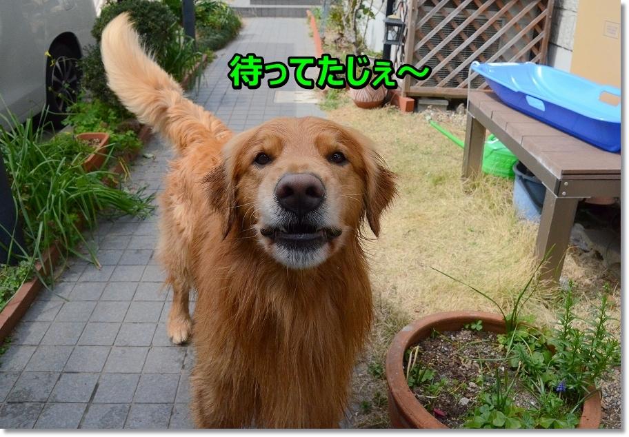 DSC_1213_201604111943399a2.jpg