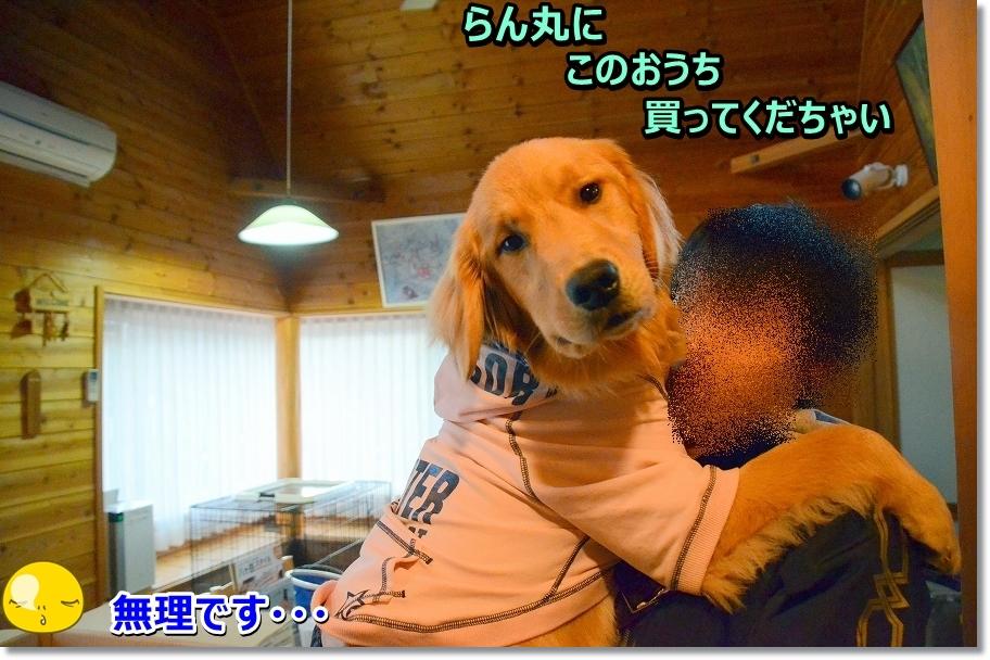 DSC_2566_20160403002136fa9.jpg