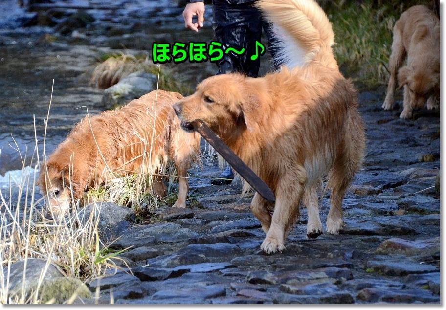 DSC_9278_2016031211190643f.jpg