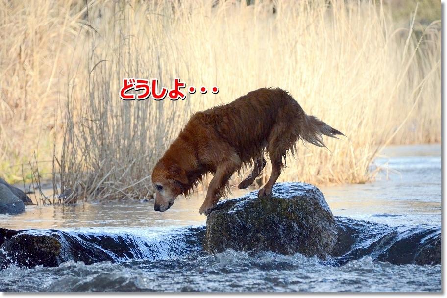 DSC_9305_2016031211194628c.jpg