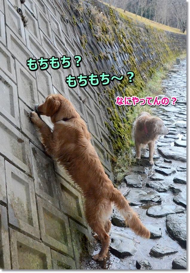 DSC_9320.jpg