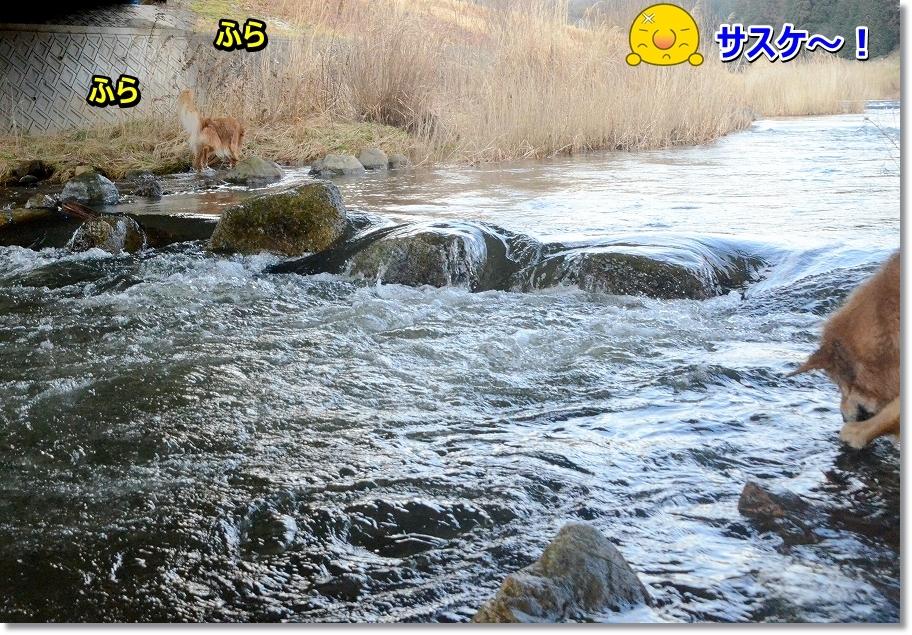 DSC_9324_2016031211200078c.jpg