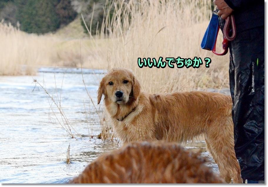 DSC_9325_2016031211200187c.jpg