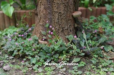 梅の木株元1528
