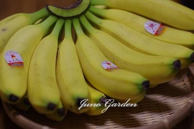 バナナ151103