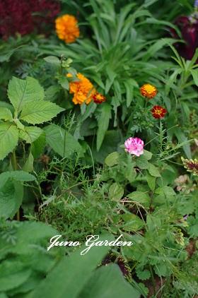 花壇1501106