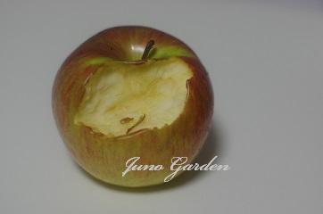 リンゴ1203