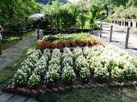 2015-09-19-秋バラ園ー277