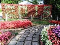 2015-09-19-秋バラ園ー280