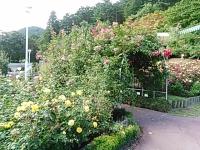 2015-09-19-秋バラ園ー307