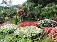 2015-09-19-秋バラ園ー333