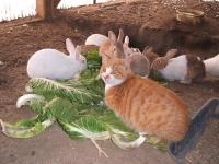5ウサギ02