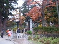 中尊寺菊祭り2015-10-31-004