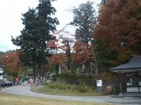 中尊寺菊祭り2015-10-31-003