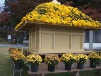 中尊寺菊祭り2015-10-31-002