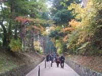 中尊寺菊祭り2015-10-31-010