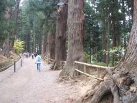中尊寺菊祭り2015-10-31-014