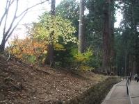 中尊寺菊祭り2015-10-31-011