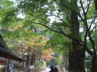 中尊寺菊祭り2015-10-31-022