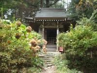 中尊寺菊祭り2015-10-31-019