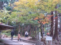 中尊寺菊祭り2015-10-31-023