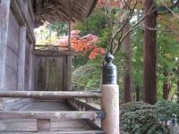 中尊寺菊祭り2015-10-31-034