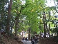 中尊寺菊祭り2015-10-31-042