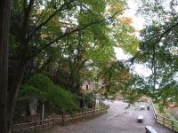 中尊寺菊祭り2015-10-31-040