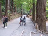 中尊寺菊祭り2015-10-31-039