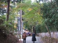 中尊寺菊祭り2015-10-31-046