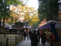中尊寺菊祭り2015-10-31-050