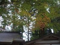 中尊寺菊祭り2015-10-31-048
