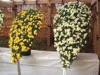 中尊寺菊祭り2015-10-31-055