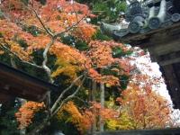 2015-11中尊寺ー006