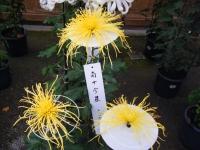 2015-11中尊寺ー021