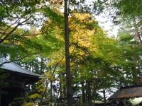 2015-11中尊寺ー060