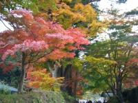 2015-11中尊寺ー068