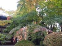 2015-11中尊寺ー053
