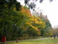 2015-11中尊寺ー106