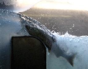 2013年11月8日②大堰自然の観察室