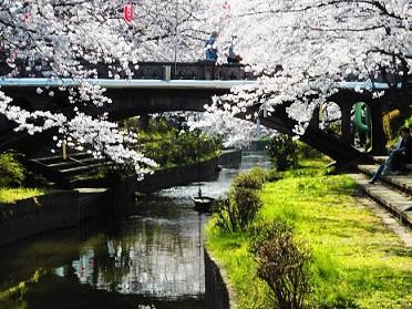 ①元荒川の桜2015年3月28日