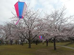 ②あかぎ公園の桜20160401