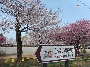 ⑤鴻巣公園の桜20160401