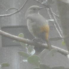 ①野鳥20160404