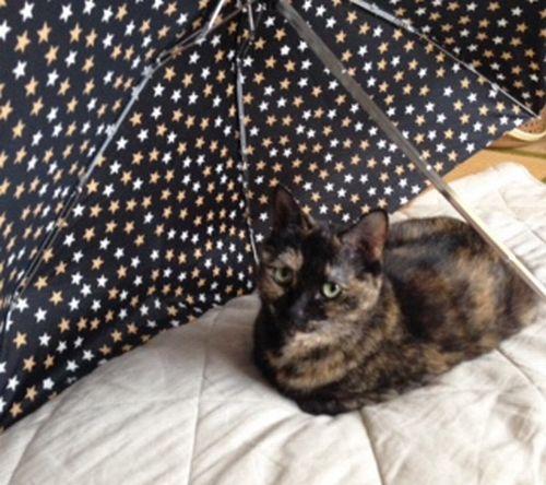 サビィ1傘