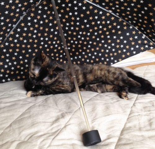 サビィ2傘
