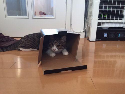 アリソン箱